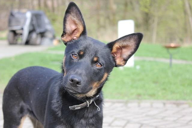 Bildertagebuch - Mika, er hatte großes Glück, er wurde auf der Autobahn gefunden - VERMITTELT - 32415893ir