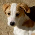 Bildertagebuch - Jimbo, süßer Hundebub möchte die Welt entdecken...ZUHAUSE IN SPANIEN GEFUNDEN! 32513019qq