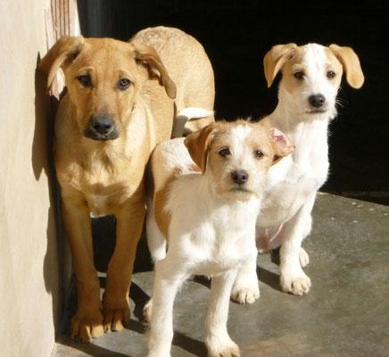 Bildertagebuch - Jimbo, süßer Hundebub möchte die Welt entdecken...ZUHAUSE IN SPANIEN GEFUNDEN! 32513022qo