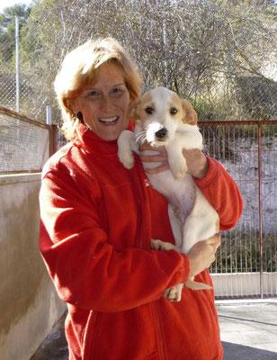 Bildertagebuch - Jimbo, süßer Hundebub möchte die Welt entdecken...ZUHAUSE IN SPANIEN GEFUNDEN! 32513025qj