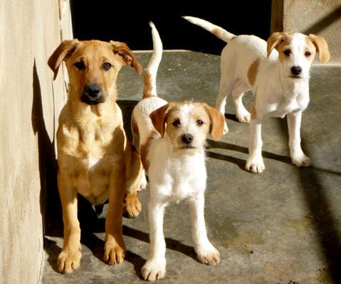 Bildertagebuch - Jimbo, süßer Hundebub möchte die Welt entdecken...ZUHAUSE IN SPANIEN GEFUNDEN! 32513027yr