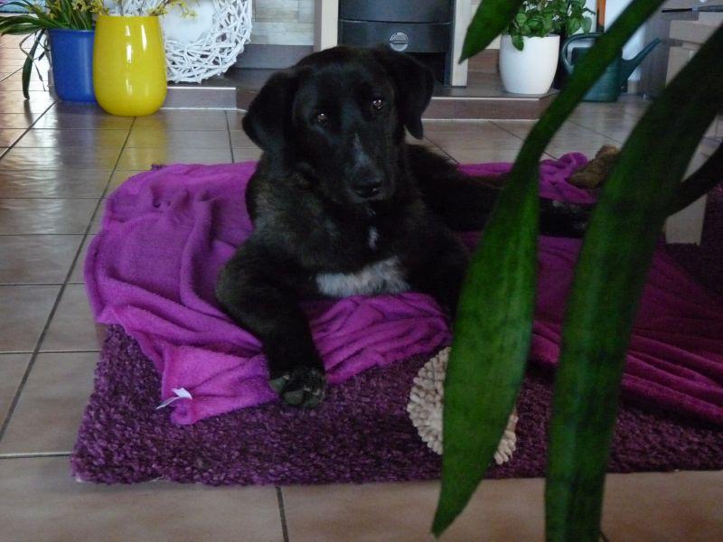 Bildertagebuch - IONA, großes, flauschiges Mädchen in der Farbe eines Wolfes - VERMITTELT! 32523406jq