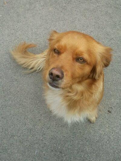 Bildertagebuch - SOUL, eine Seele von Hund...in ITALIEN ZUHAUSE GEFUNDEN! 32562056us