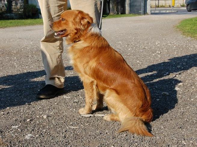 Bildertagebuch - SOUL, eine Seele von Hund...in ITALIEN ZUHAUSE GEFUNDEN! 32562063xz