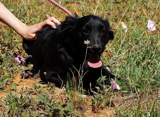 Bildertagebuch - Niam, witziger Hundejunge auf der Suche nach seiner Familie - ZUHAUSE IN SPANIEN GEFUNDEN! 32655071by