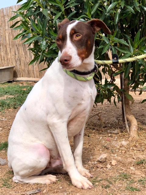 Bildertagebuch  - Kylo: ein bildschöner, eleganter, und cleverer Hund für aktive Menschen! - VERMITTELT- 32660372rx