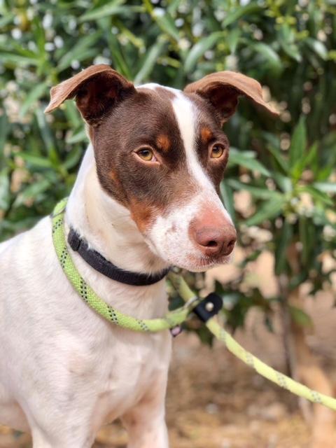 Bildertagebuch  - Kylo: ein bildschöner, eleganter, und cleverer Hund für aktive Menschen! - VERMITTELT- 32660374dz