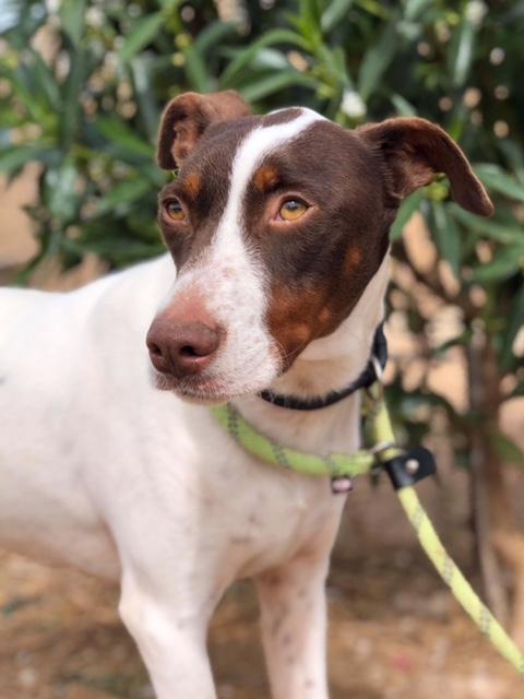 Bildertagebuch  - Kylo: ein bildschöner, eleganter, und cleverer Hund für aktive Menschen! - VERMITTELT- 32660377ry