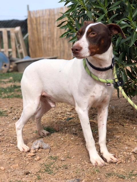 Bildertagebuch  - Kylo: ein bildschöner, eleganter, und cleverer Hund für aktive Menschen! - VERMITTELT- 32660379wu