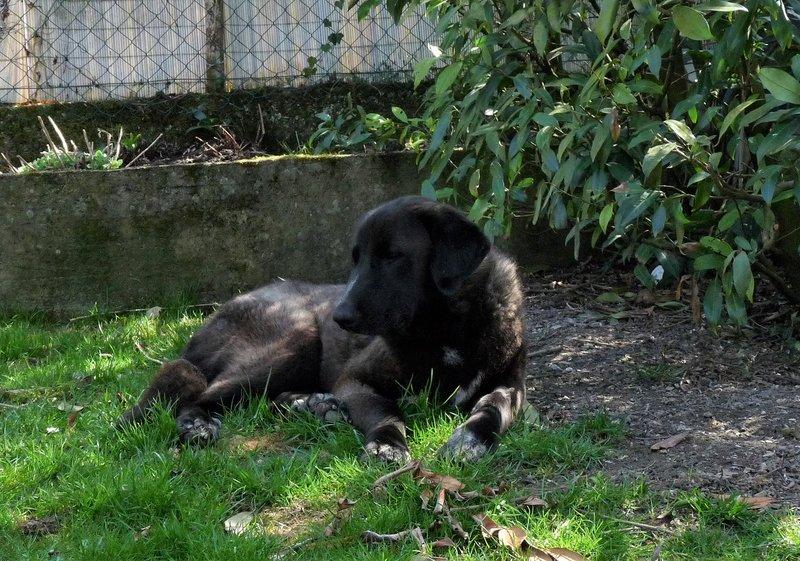 Bildertagebuch - IONA, großes, flauschiges Mädchen in der Farbe eines Wolfes - VERMITTELT! 32690561lz