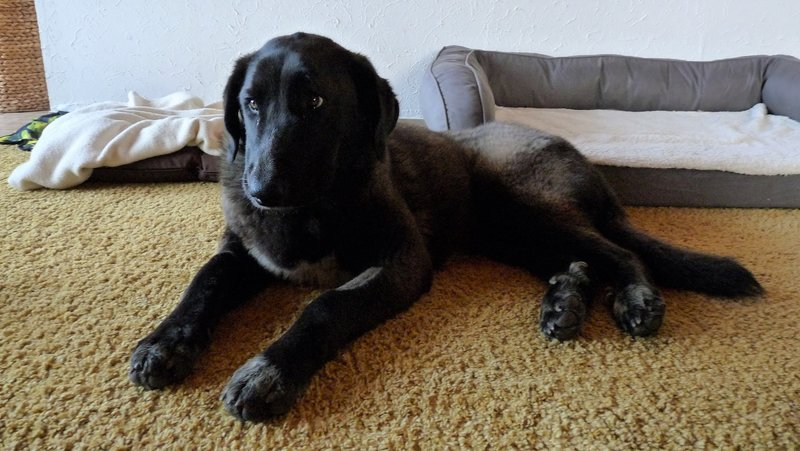 Bildertagebuch - IONA, großes, flauschiges Mädchen in der Farbe eines Wolfes - VERMITTELT! 32690596po