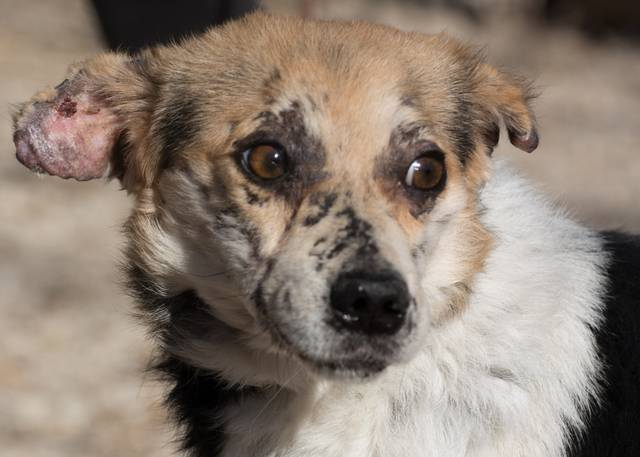 cooper - Bildertagebuch - COOPER darf als Dauerpflegehund auf seiner Pflegestelle bleiben 32700622am