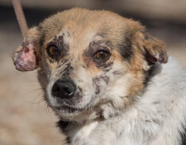 cooper - Bildertagebuch - COOPER darf als Dauerpflegehund auf seiner Pflegestelle bleiben 32700623pc