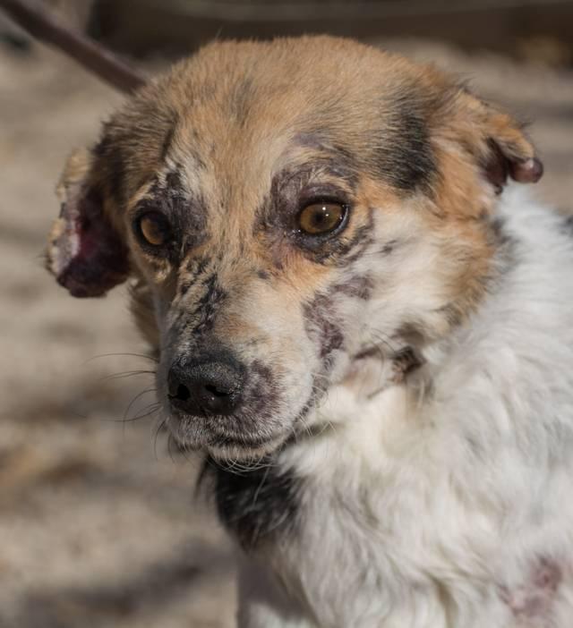 cooper - Bildertagebuch - COOPER darf als Dauerpflegehund auf seiner Pflegestelle bleiben 32700624qo