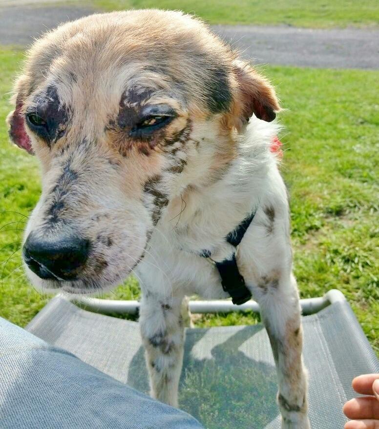 cooper - Bildertagebuch - COOPER darf als Dauerpflegehund auf seiner Pflegestelle bleiben 32711778am