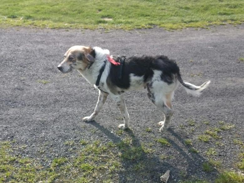 cooper - Bildertagebuch - COOPER darf als Dauerpflegehund auf seiner Pflegestelle bleiben 32711780yd