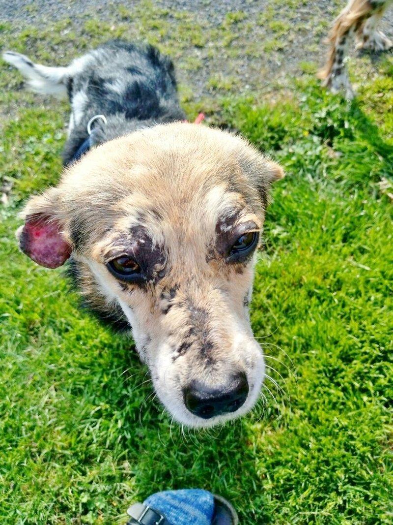cooper - Bildertagebuch - COOPER darf als Dauerpflegehund auf seiner Pflegestelle bleiben 32711781hp