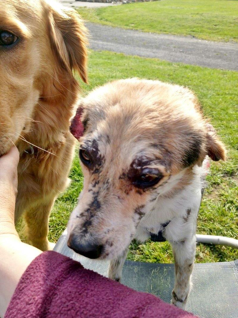 cooper - Bildertagebuch - COOPER darf als Dauerpflegehund auf seiner Pflegestelle bleiben 32711784fu