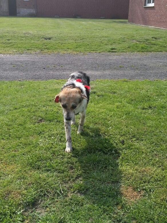 cooper - Bildertagebuch - COOPER darf als Dauerpflegehund auf seiner Pflegestelle bleiben 32711786kz
