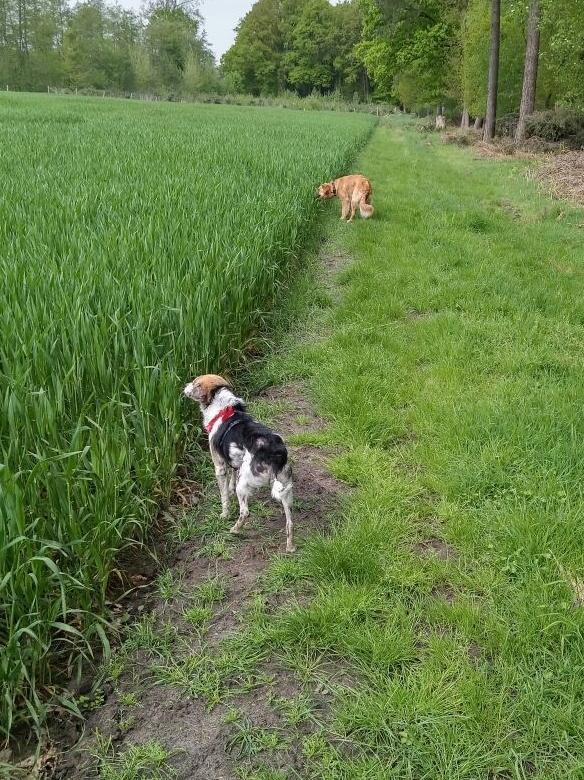 cooper - Bildertagebuch - COOPER darf als Dauerpflegehund auf seiner Pflegestelle bleiben 32711787qv