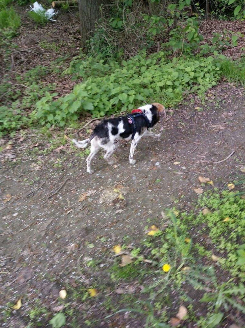 cooper - Bildertagebuch - COOPER darf als Dauerpflegehund auf seiner Pflegestelle bleiben 32711788vo