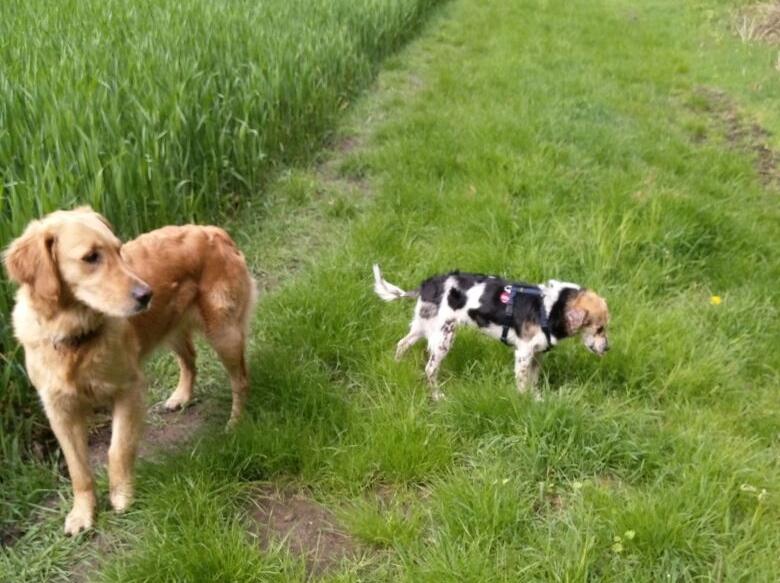 cooper - Bildertagebuch - COOPER darf als Dauerpflegehund auf seiner Pflegestelle bleiben 32711789uq