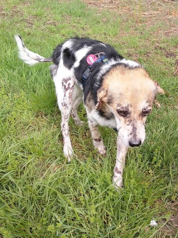 cooper - Bildertagebuch - COOPER darf als Dauerpflegehund auf seiner Pflegestelle bleiben 32711790ls