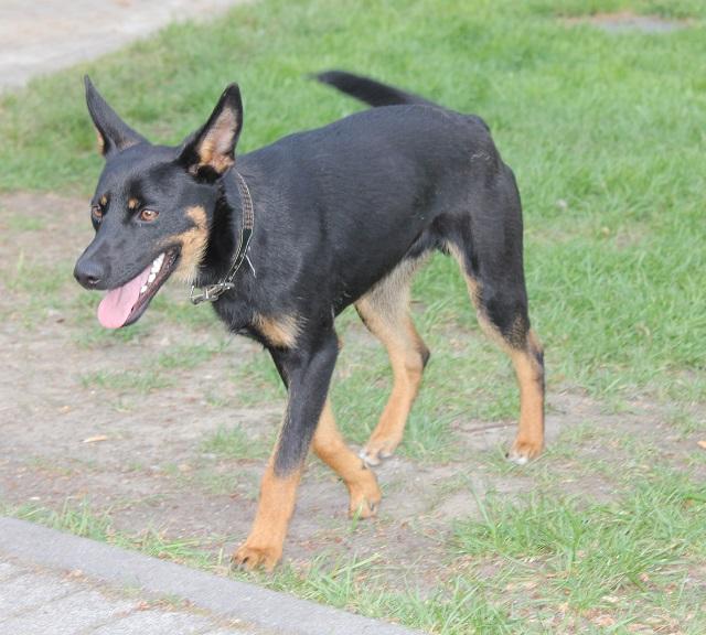 Bildertagebuch - Mika, er hatte großes Glück, er wurde auf der Autobahn gefunden - VERMITTELT - 32978587jy