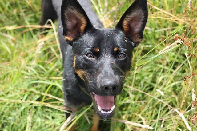 Bildertagebuch - Mika, er hatte großes Glück, er wurde auf der Autobahn gefunden - VERMITTELT - 32978593wg