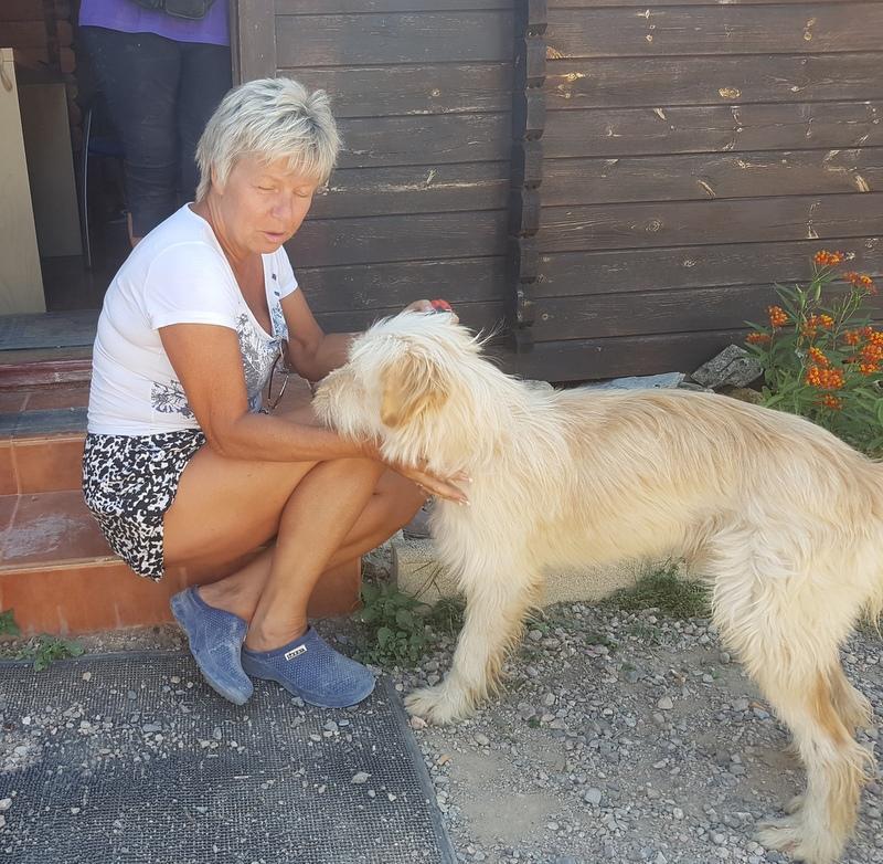 Bildertagebuch - Blonder Shaggy sucht Körbchen - VERMITTELT! 33094439vc