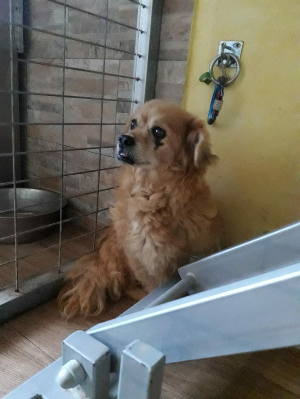 150 Hunde aus Messi-Haltung in Spanien beschlagnahmt - Pflegestellen und Endstellen dringend gesucht! 33280141ns