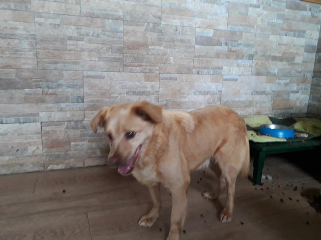 150 Hunde aus Messi-Haltung in Spanien beschlagnahmt - Pflegestellen und Endstellen dringend gesucht! 33280142hr