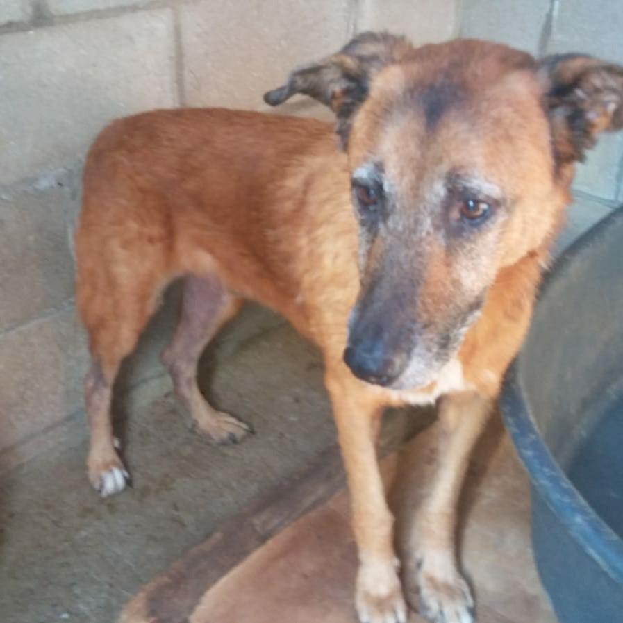 150 Hunde aus Messi-Haltung in Spanien beschlagnahmt - Pflegestellen und Endstellen dringend gesucht! 33280144ls