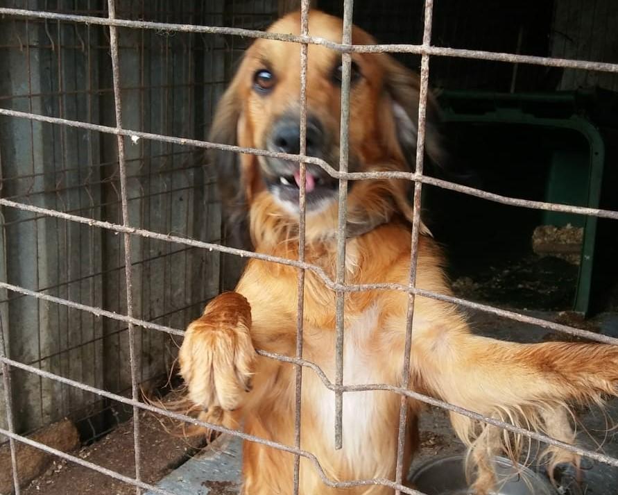 150 Hunde aus Messi-Haltung in Spanien beschlagnahmt - Pflegestellen und Endstellen dringend gesucht! 33280145ru