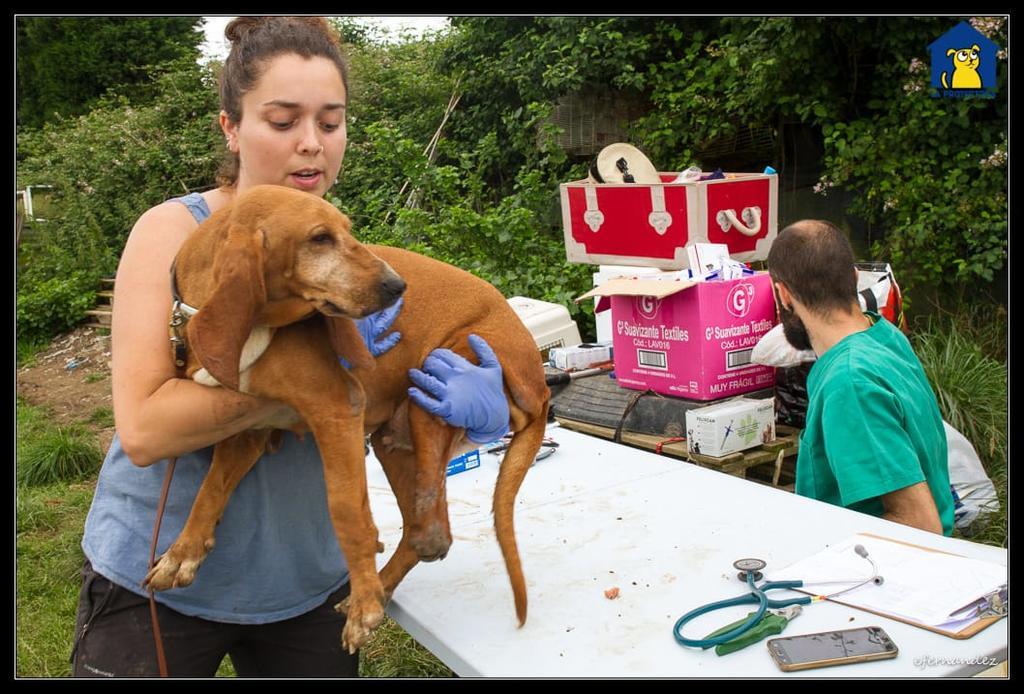 150 Hunde aus Messi-Haltung in Spanien beschlagnahmt - Pflegestellen und Endstellen dringend gesucht! 33280148mi