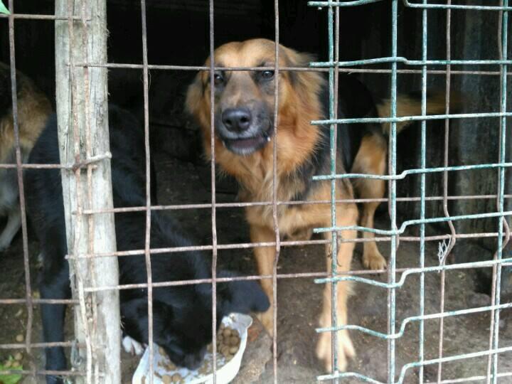 150 Hunde aus Messi-Haltung in Spanien beschlagnahmt - Pflegestellen und Endstellen dringend gesucht! 33280206ql