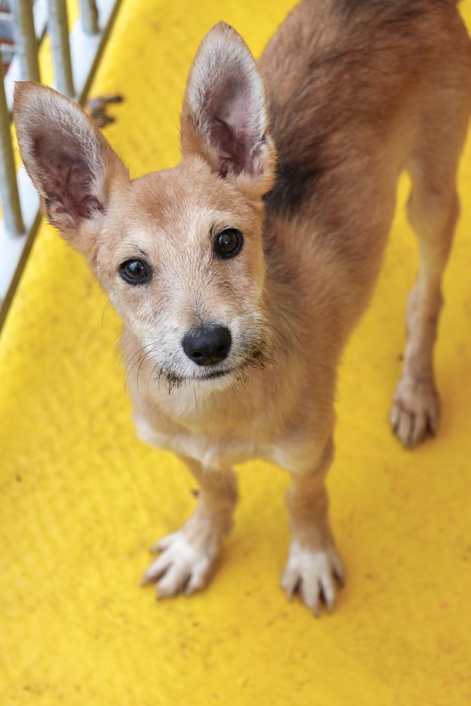 150 Hunde aus Messi-Haltung in Spanien beschlagnahmt - Pflegestellen und Endstellen dringend gesucht! 33291310dx
