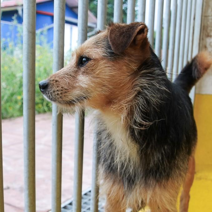 150 Hunde aus Messi-Haltung in Spanien beschlagnahmt - Pflegestellen und Endstellen dringend gesucht! 33291312nt