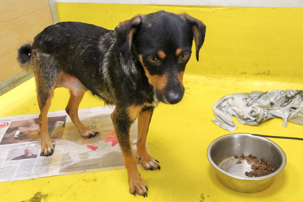 150 Hunde aus Messi-Haltung in Spanien beschlagnahmt - Pflegestellen und Endstellen dringend gesucht! 33291314qj