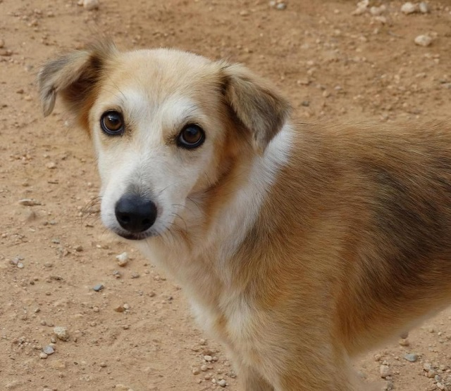Bildertagebuch - Pluma, ein sensibles Hundemädchen sucht Menschen mit viel Geduld! Zuhause in Spanien gefunden! 33483165nm
