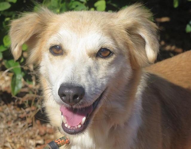 Bildertagebuch - Pluma, ein sensibles Hundemädchen sucht Menschen mit viel Geduld! Zuhause in Spanien gefunden! 33483166ua
