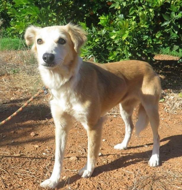 Bildertagebuch - Pluma, ein sensibles Hundemädchen sucht Menschen mit viel Geduld! Zuhause in Spanien gefunden! 33483168zq