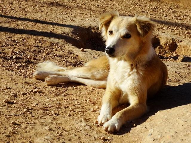Bildertagebuch - Pluma, ein sensibles Hundemädchen sucht Menschen mit viel Geduld! Zuhause in Spanien gefunden! 33483169ow
