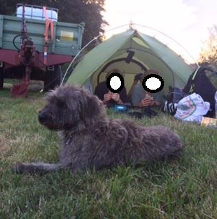 Bildertagebuch - Freddy (ehem. Django), verspielter Hund mit Flausen im Kopf - VERMITTELT! 33519291vu