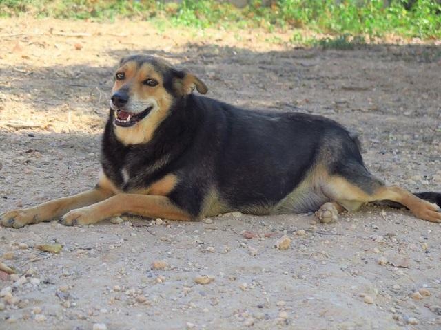 Bildertagebuch - Luuz, hat in den Bergen gelebt und ist bereit für ihr Zuhause - VERMITTELT - 33657838jv