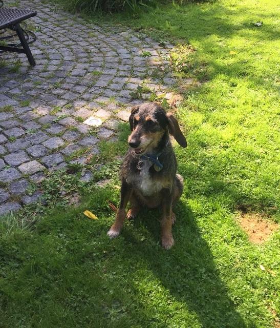 Bildertagebuch- Freya, eine ganz süße bewegungfreudige Langohrmaus sucht Familie - VERMITTELT - 33729857jy