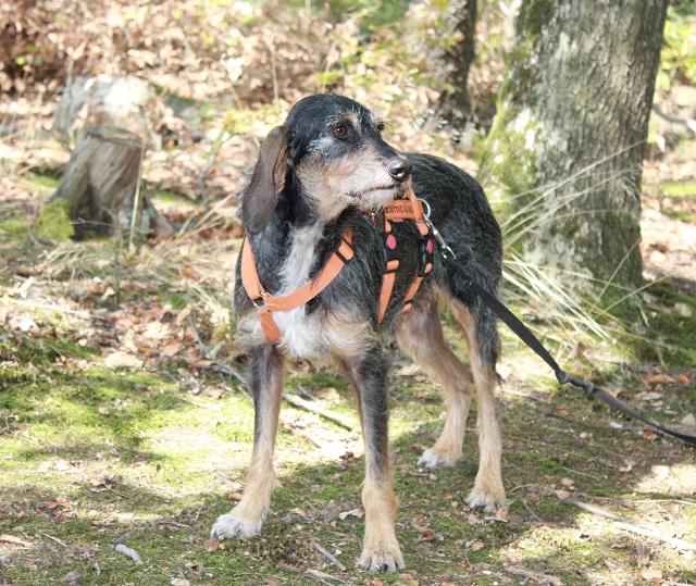 Bildertagebuch- Freya, eine ganz süße bewegungfreudige Langohrmaus sucht Familie - VERMITTELT - 33804333cz