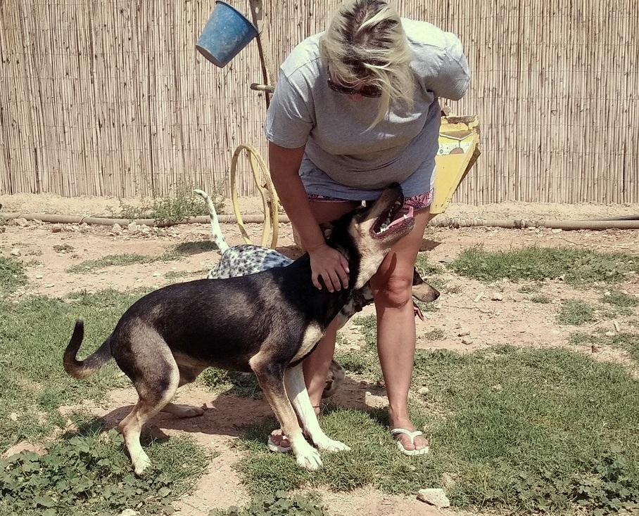 Bildertagebuch - DASHER, eine Knutschkugel in Hundegestalt - VERMITTELT - 33834432fe