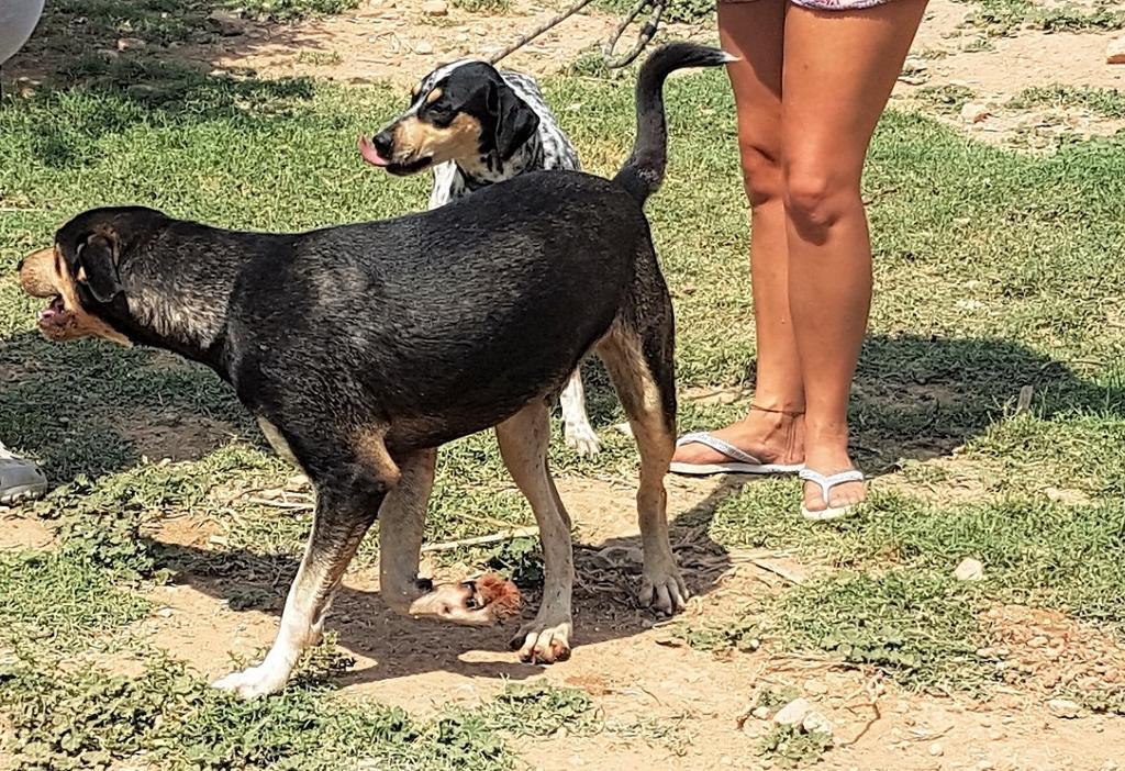 Bildertagebuch - DASHER, eine Knutschkugel in Hundegestalt - VERMITTELT - 33834433bj