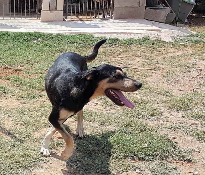 Bildertagebuch - DASHER, eine Knutschkugel in Hundegestalt - VERMITTELT - 33834436ys